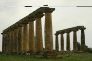 1 - Metaponto si trova sulla costa sud della Basilicata a 48 Km da Matera. Antica colonia della Magna Grecia, fu fondata nel 773 a.C.