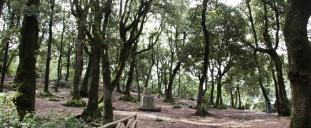 27- da-spoleto-a-monteluco-circa-2km-bosco-sacro-luogo-di-eremi-francescani-i-pendii-e-la-sommità-del-monteluco-ricoperto-da-una-distesa-di-lecci-secolari-