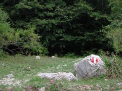 37 - Gubbio. Parco di Monte Cucco