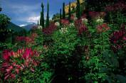 56 - I Giardini botanici di Castel Trauttmansdorff, Merano