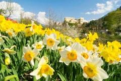 57 - Da anni i Giardini di Castel Trauttmansdorff si attestano tra i luoghi più amati dai visitatori italiani e stranieri, grazie alla varietà ...