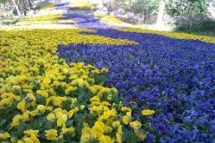 58 - La primavera nei Giardini di Castel Trauttmansdorff