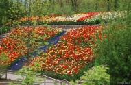 59 - Giardini di Castel Trauttmansdorff Piante provenienti da ogni parte del mondo, ma anche dall'Alto Adige