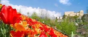 60 - Tulipani al castello di Trauttmansdorff.jpg
