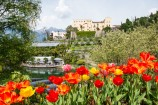 61 - Primavera. Trauttmansdorff - Panorama Primavera