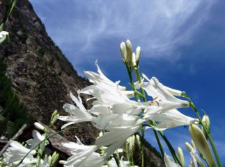 20,1- Gran Paradiso è uno dei parchi naturali italiani più visitati grazie ai suoi scorci spettacolari e alla natur