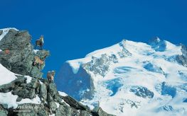 50 - Monte Rosa-Wallis