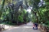 137 - Il bosco di Capodimonte