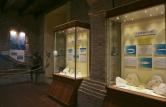 23 - Mondaino. Museo paleontologico
