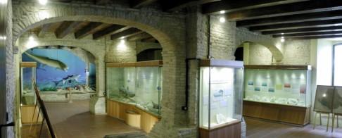 24 - Museo paleontologico, Mondaino...