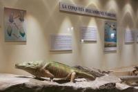 25 - Museo paleontologico, Mondaino