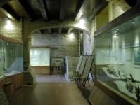 26 - Museo paleontologico, Mondaino--