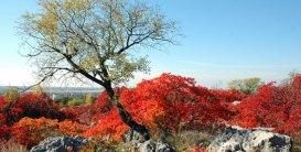 95 - Trieste. Carso in autunno