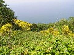 11 - Pesaro. Paesaggio- Parco Naturale Monte San Bartolo