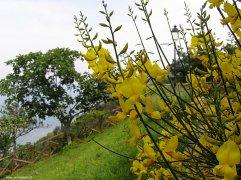 85 - Panorama del parco dal borgo di Fiorenzuola di Focara -