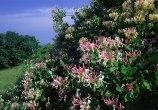 37- Flora del parco.