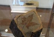 90 - Parco San Bartolo. Fiorenzuola, Museo Paleontologico