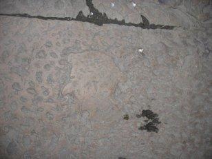 109 -Firenze. Il Museo della Casa di Dante. Profilo di Dante scolpito su una lastra nel pavimento della piazzetta davanti alla torre
