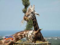 69 -Zoo Safari di Fasano