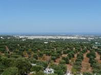 """2- Fasano.E'un comune italiano di 39.717 abitanti della Provincia di Brindisi conosciuta anche come ''Città dell' olio""""."""