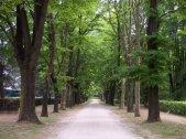 49 -Un viale nel Parco delle Terme